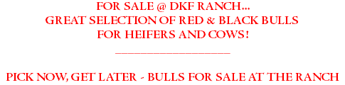 FOR SALE @ DKF RANCH... GREAT SELECTION OF RED & BLACK BULLS FOR HEIFERS AND COWS! __________________ PICK NOW, GET LATER - BULLS FOR SALE AT THE RANCH